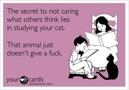 yep....not even one!: Crazy Cats, I Love Cats, Life Lessons, Honey Badger, Crazy Cat Lady, The Secret, Good Advice, Cats Lol, Animal