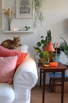 Die schönsten Bilder & Momente aus dem SoLebIch Jahr 2016   SoLebIch.de, Foto: Ginger-Bee, #wohnzimmer #livingroom #cat