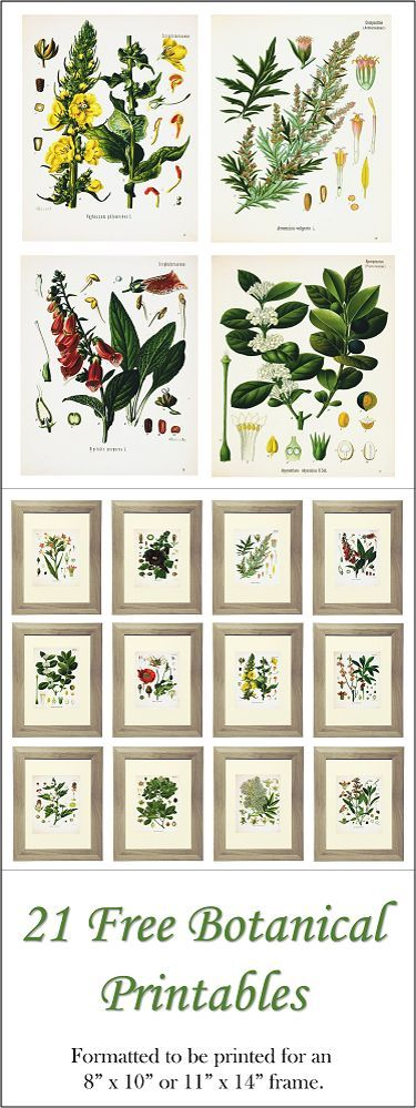 "21 Free Botanical Printables.  Formatted to be printed for 8"" x 10"" or 11"" x 14"" frames.  www.simplymadebyrebecca.wordpress.com."