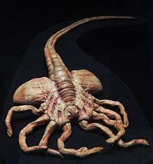 Facehugger prop for Aliens, 1986. National Museum of Cinema, Turin