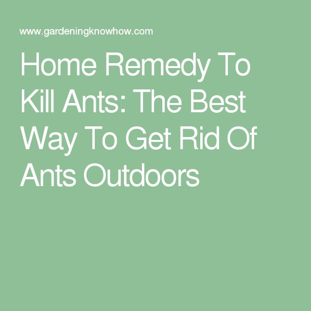 Natural Way Of Getting Rid Of Ants In Garden