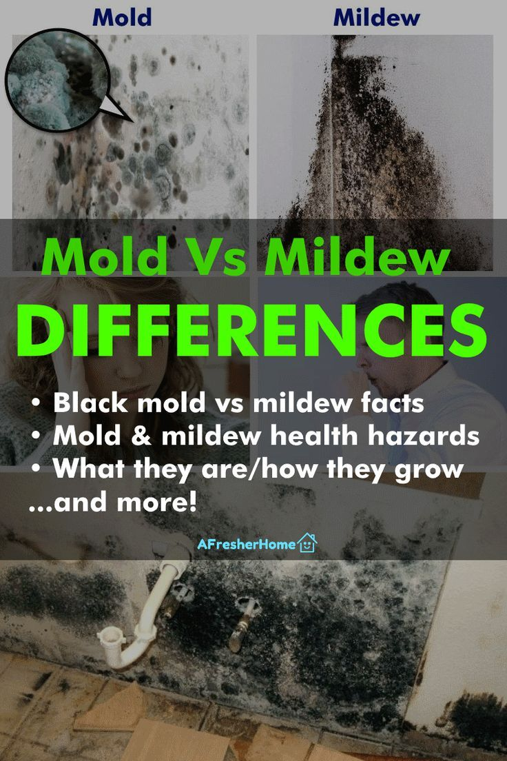 Mold Vs Mildew: What Are The Differences? + Black Mold ...