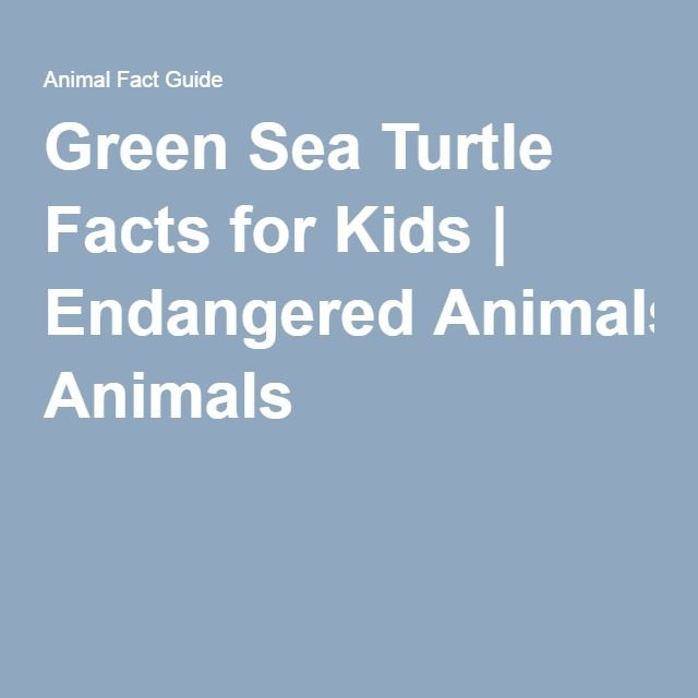 Green Sea Turtle Facts for Kids | Endangered Animals