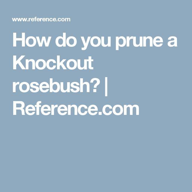 How do you prune a Knockout rosebush? | Reference.com