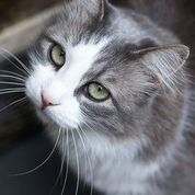 Find your perfect kitty match - what you need to consider at www.pets4life.com.au