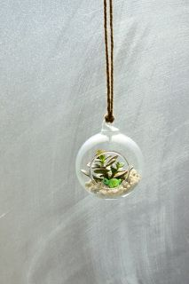 Money plant terrarium in a glass hanging vase   Money plant is also called jade plant, luck plant, and it will bring good luck to you.   You will receive: two money plants, a turtle, and some gravels.   If you want some other animal figurine, you can buy from this listing https://www.etsy.com/uk/listing/186640107/terrarium-decoration-miniature-animal?ref=listing-0  The diameter is 8 cm (3.15 inches), the open mouth is 4.5 cm (1.8 inches)  Hemp string will be provided  Any questions, please…