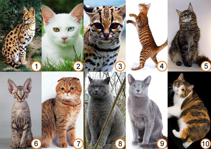 Видео о кошках различных пород - http://dogcat.yworld.ru/koshki/video-o-koshkax-razlichnyx-porod.html