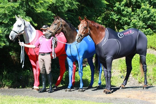 Equine Travel Suits courtesy of animal tracks website.