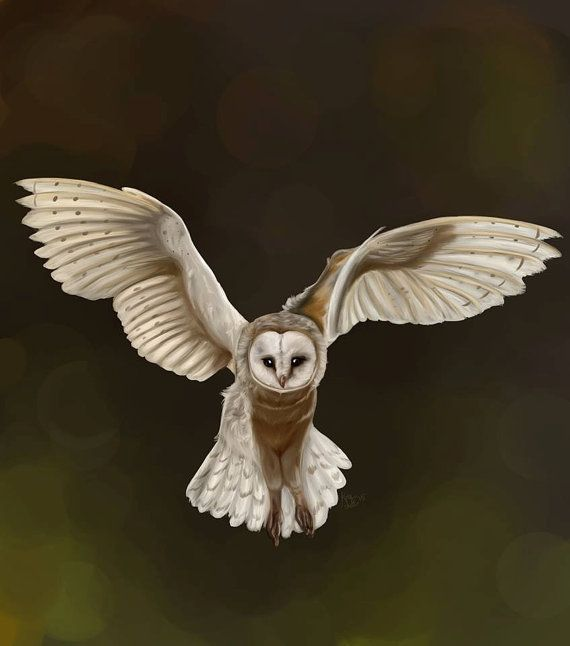 how to draw a barn owl head easy