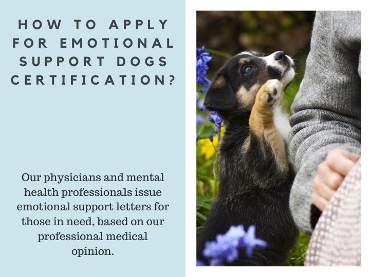 How To Apply For Emotional Support Dogs Certification? in