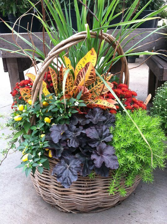 Best 25 fall potted plants ideas on pinterest autumn garden pots fall container gardening - Potted autumn flowers ...