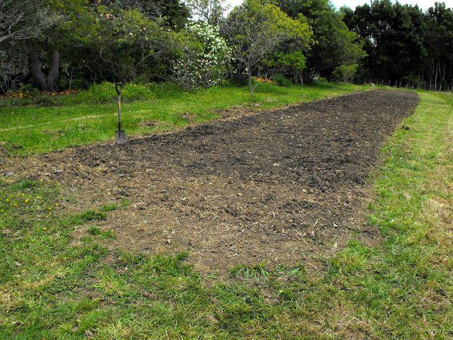 How I prepared a new wildflower garden.