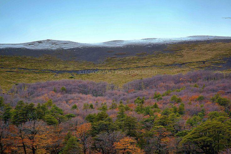 Colores de Antillanca - P.Nac. Puyehue (Patagonia - Chile)