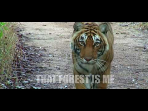 "KhabarSpecial.com (Online News Channel): Sushmita Sen's Forest Wildlife Special Film ""The S..."