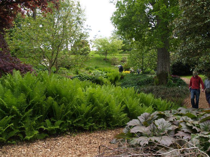 папоротниковый-сад.jpg (1280×960)