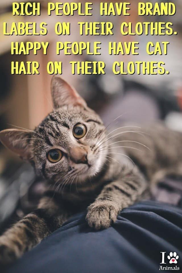 My Clothes Are Full Of Cat Hair Cats Cat Quotes Funny Crazy Cats