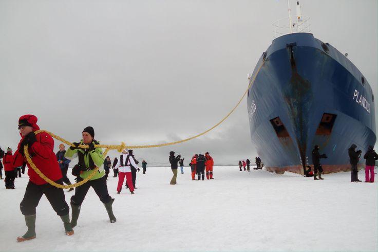 Este é um dos destinos mais inusitados de toda a Península Antártica. Com acesso por um estreito canal de 150 metros, na baía Foster, a ilha está localizada no interior da cratera congelada de um vulcão