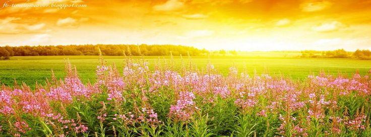Beautiful pink floral at sunrise