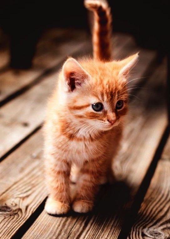 Amour de chat  🧡🧡🧡 chats calin –     Chats et chatons- chaton mignon -b…