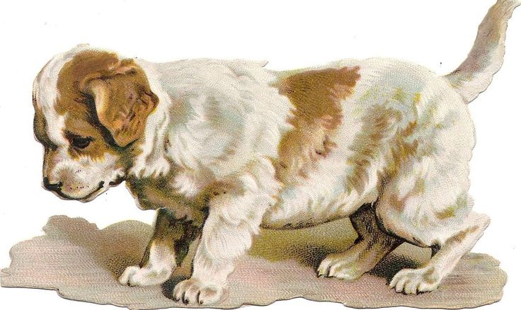 Oblaten Glanzbild scrap die cut chromo Hund 14,5 cm dog chien | eBay: