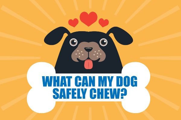 Safe Chew Toys For Dogs Vet Recommended Tips To Help You Chews