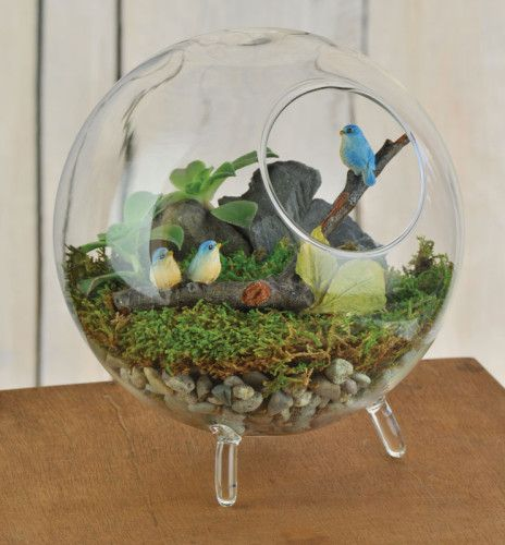 24 Best Mossarium Images On Pinterest Fairies Garden Gardening And Miniature Gardens