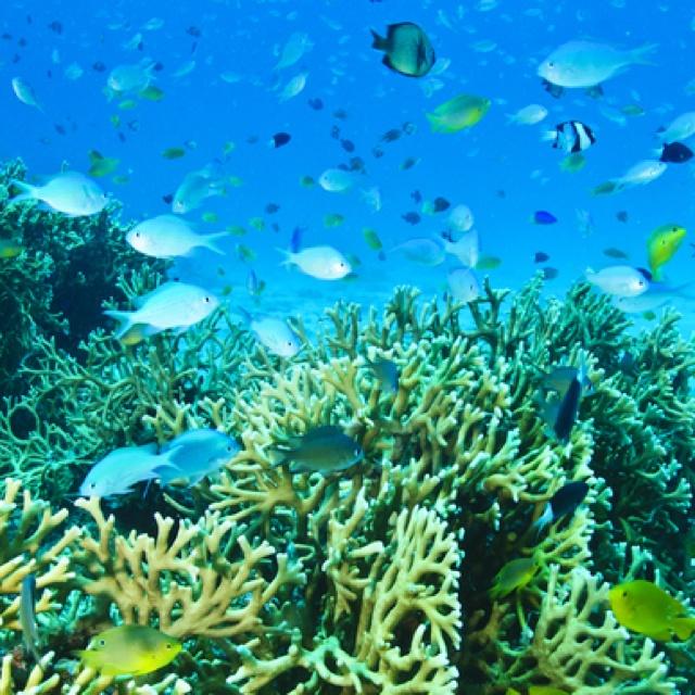 inside of the kerama's sea. | JAPON | Pinterest
