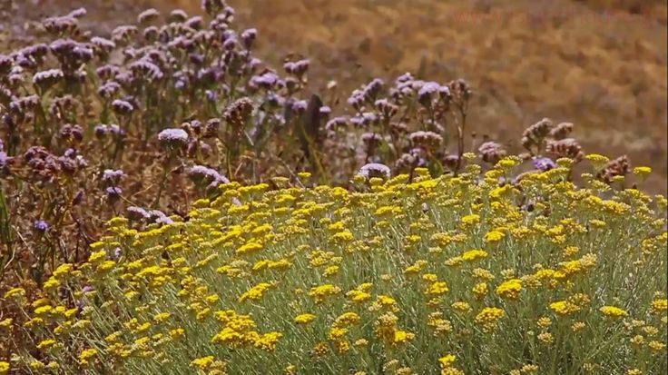 The nature of Ios island in #Greece! A walker's heaven!  Visit www.islandhouse.gr