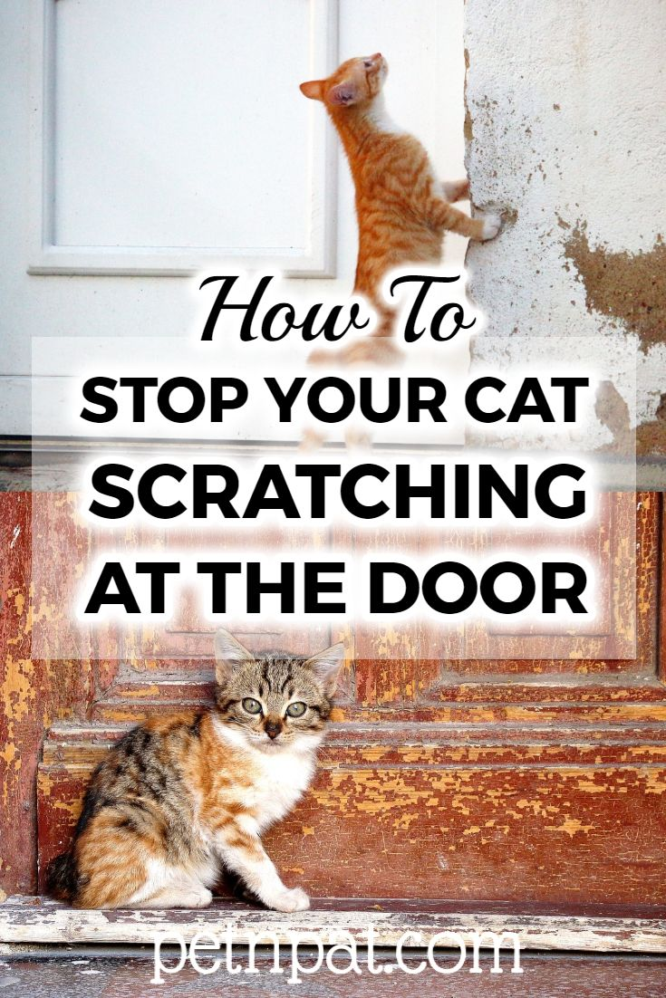 How To Stop Your Cat From Scratching At The Door In 2020 Animals For Kids Pet Hacks Pets Cats