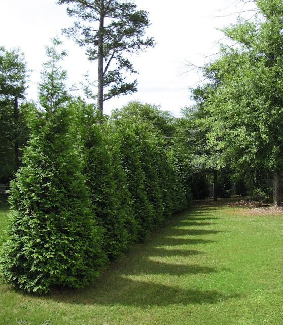 1000 images about hillside landscaping on pinterest for Natural privacy fence