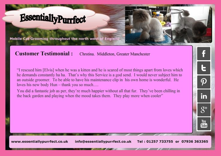Customer Testimonial of EssentiallyPurrfect #mobile #Persian #cat #catgrooming service.  Christina #Middleton #Manchester