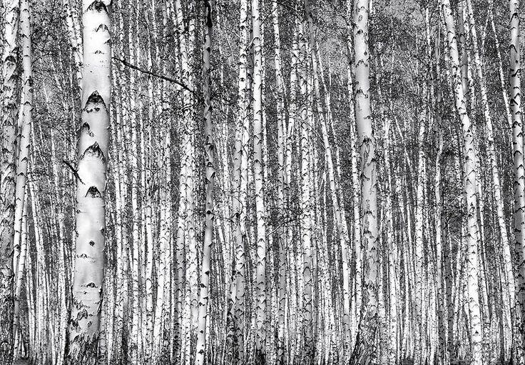 Selbstklebende Tapete Gras : Birkenwald auf Pinterest Fototapete, Tapete Grau und Lila Zimmer