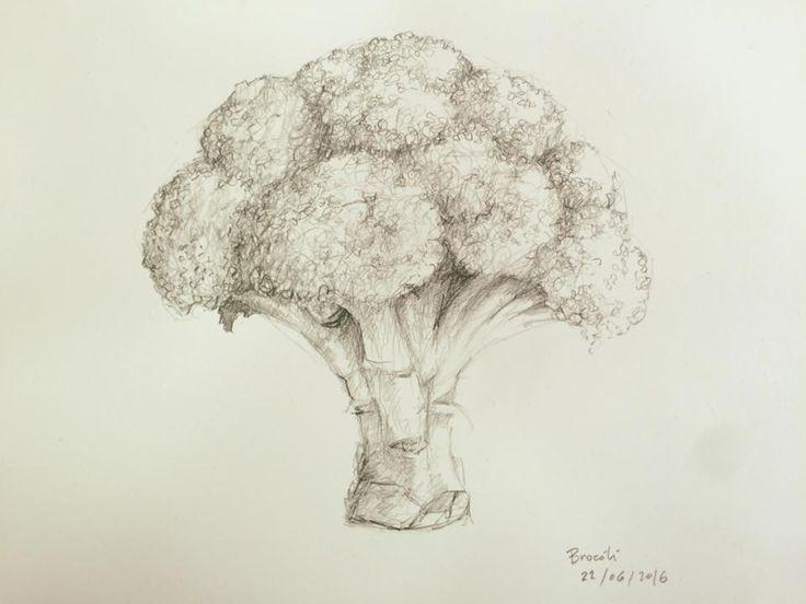 Dibujo Brocoli, lápiz sobre papel, obra de Ignacio Muñoz Cano