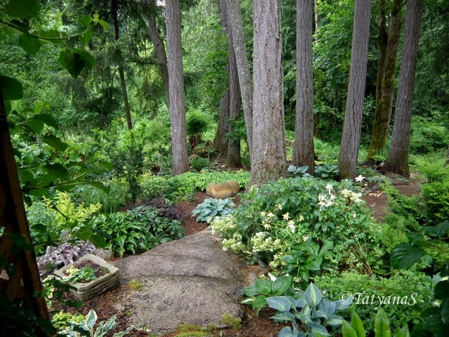 17 Best Images About Woodland Garden On Pinterest