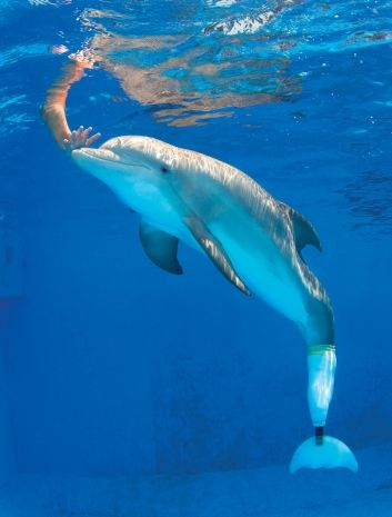 Meet 'Dolphin Tale' movie star Winter at Clearwater Marine Aquarium. Can't wait to go next weekend!