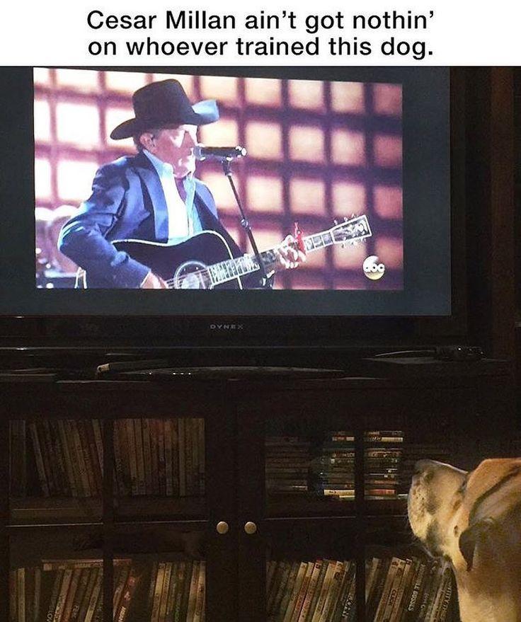 Best 25 Texas Humor Ideas On Pinterest Texas Texas