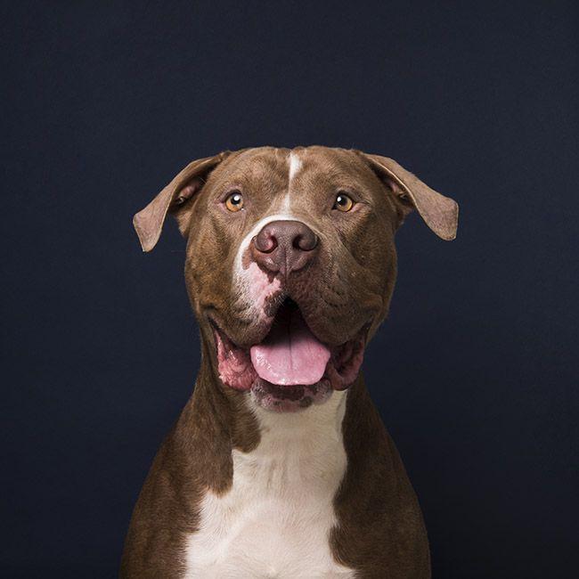 Miami Max Animal Haven Animals Terrier Mix Pet Adoption