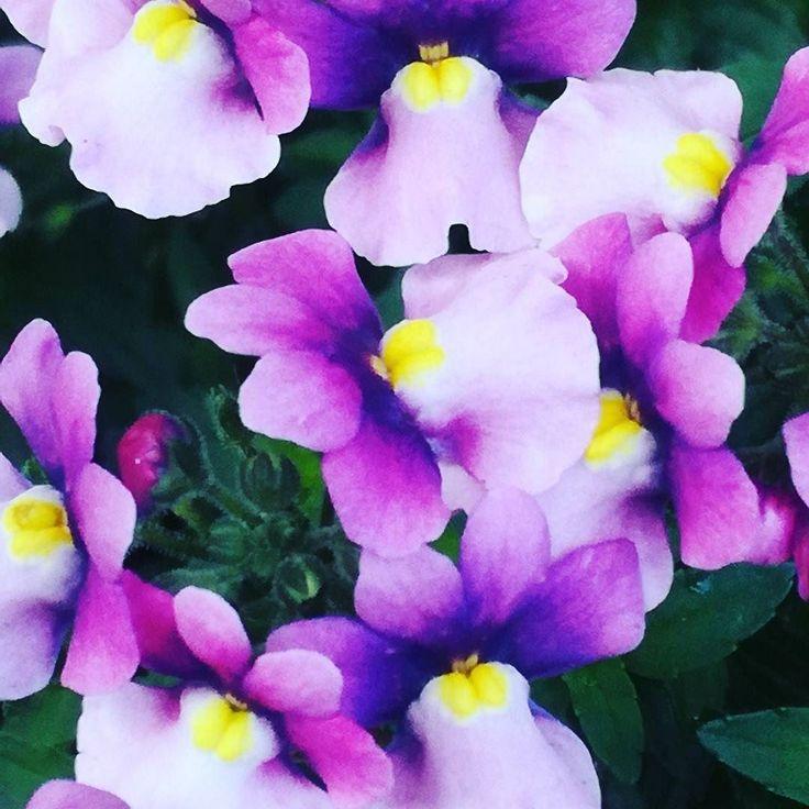 Jesienne kwiaty cd.  #dianapozytywnie
