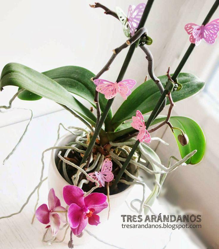 #orquideas y #mariposas #diy #scrapbooking