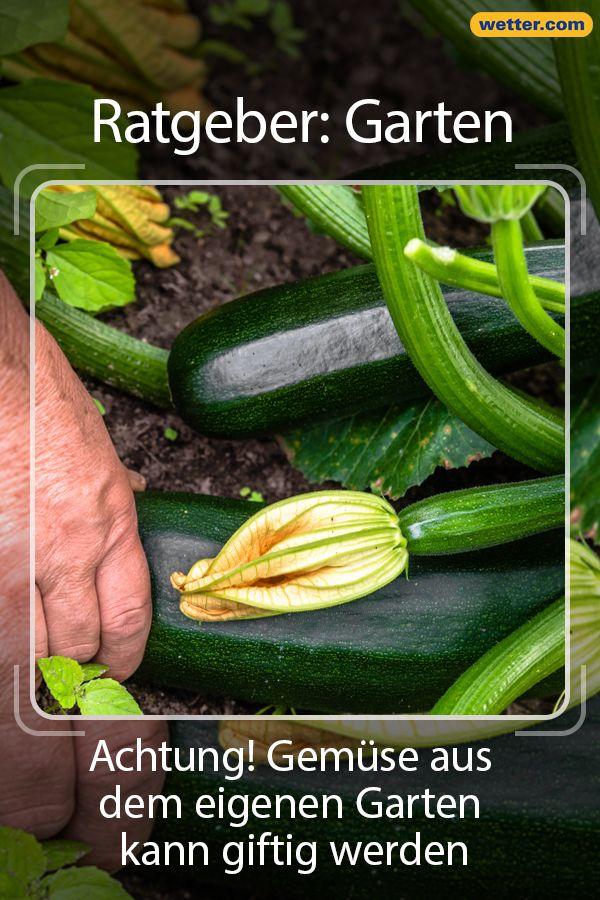 Achtung Gemuse Aus Dem Eigenen Garten Kann Giftig Werden Garten Garten Deko Diy Garten