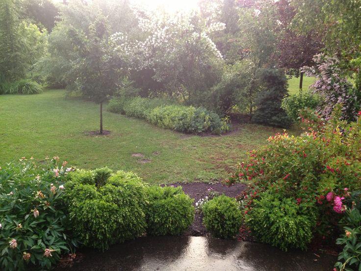 my garden in rain