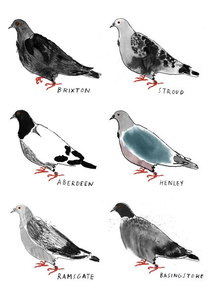 Alice Tait could even make me like pigeons.