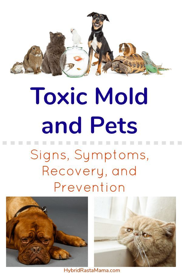 How Toxic Mold Affects Pets How To Help Them Recover Toxic