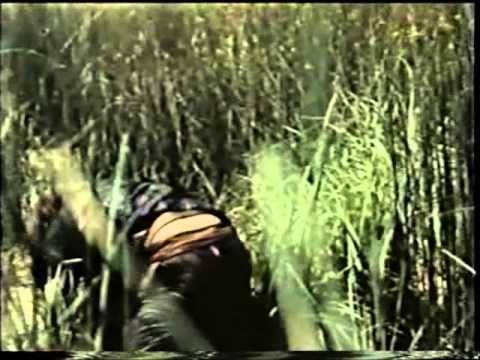 L'amante di Gramigna, 1969