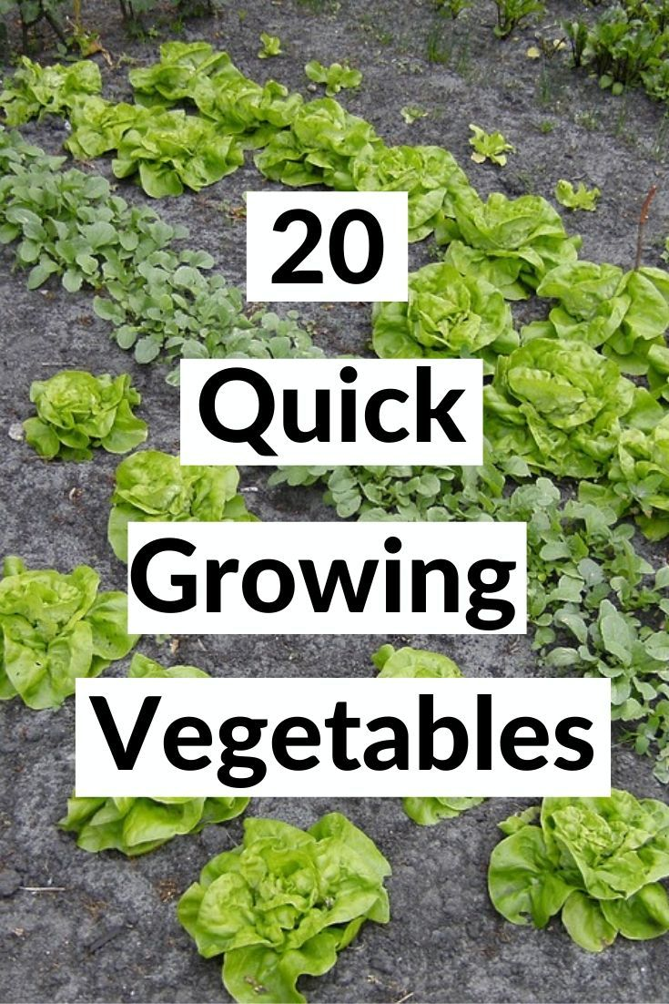 Best 20 Fast Growing Vegetables That Will Give You Harvest Quickly In 2020 Fast Growing Vegetables Growing Vegetables Vegetable Garden For Beginners