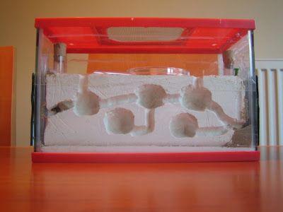 aquaflash: 31. Hormigueros artificiales