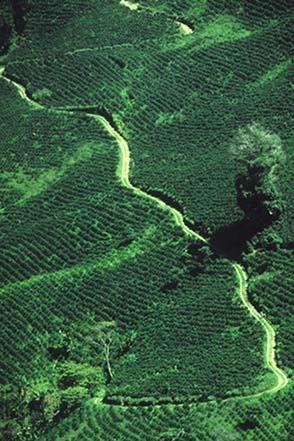 Fotografía aérea de plantaciones de café en Colombia.