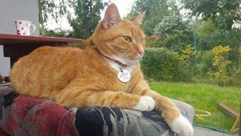 Amber - piękny rudzielec samotny czeka na nowy dom.