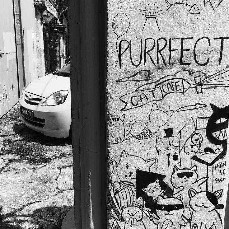 Purrfect Cat Café . . . . . #latergram #vsco #vscocam #vscogood #iphone #iphonephotography #georgetown #penang #malaysia #southeastasia #streetart #blackandwhite #blackabdwhitephotography #blackandwhitephoto