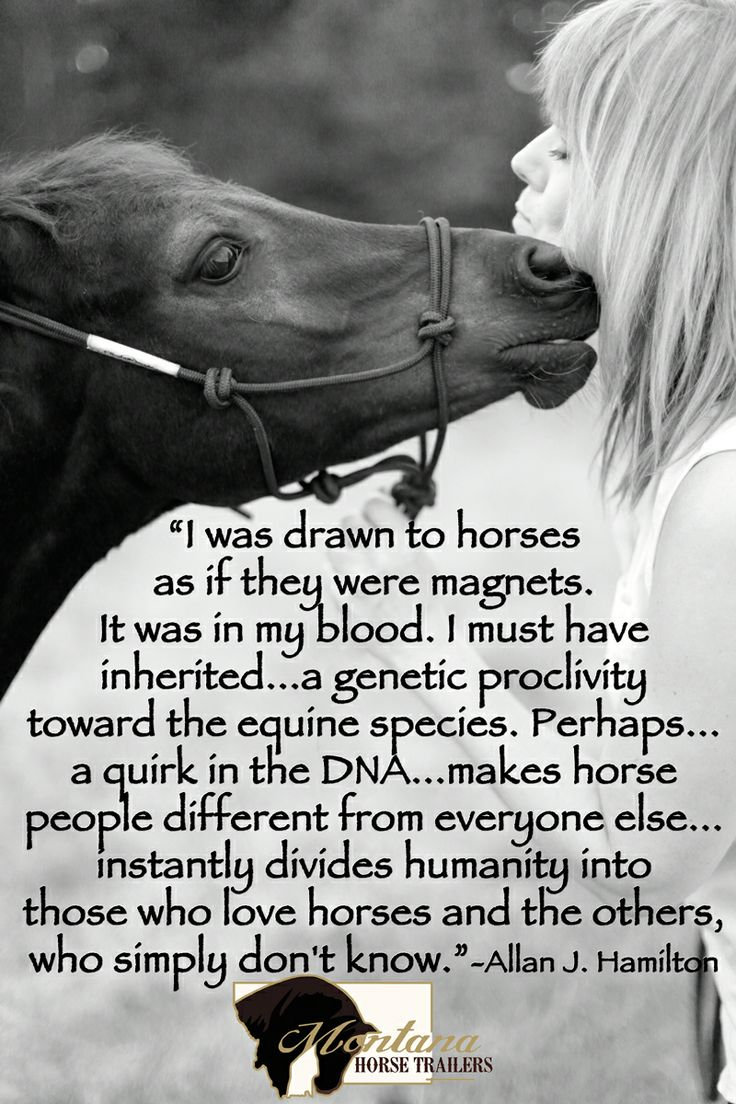 Pics photos quote i wrote for my horse com account s equestrian - Find This Pin And More On Equestrian Quotes